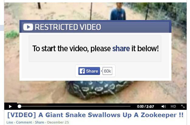 Giant snake Facebook scam