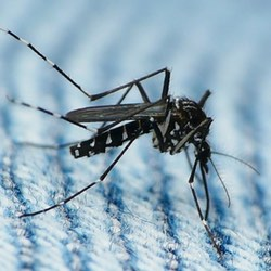 Zika virus fears exploited to spread malware
