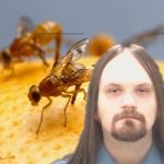 Fruitfly malware spied on Mac users for 13 years – man charged