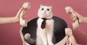 Smashing Security podcast #152: Cats, hoodies, and rent