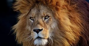 Smashing Security podcast #167: Coronavirus scams and an exaggerated lion